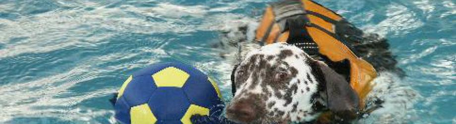 The White Orchid canine hydrotherapy centre.   West Chiltington, Pulborough, West Sussex.  Tel 01798 815191